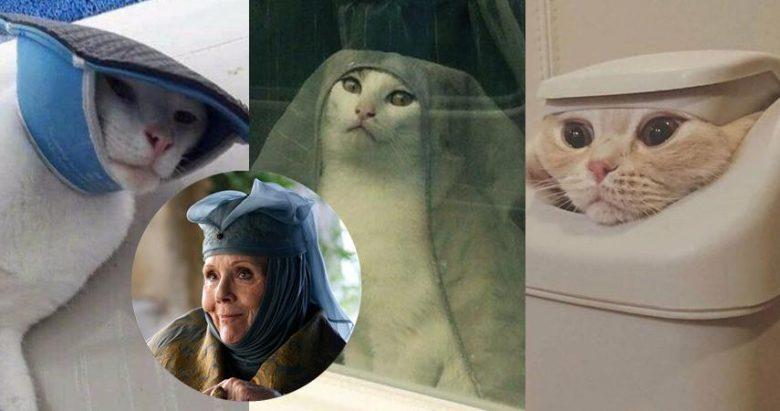 Cat Driving Car Video