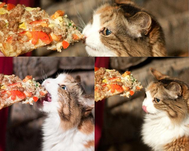 Crust In Cats Ears