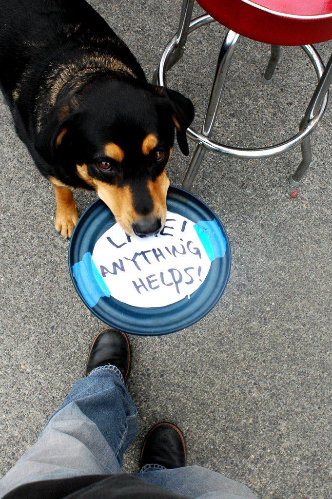 Dog Giving High Five Gif