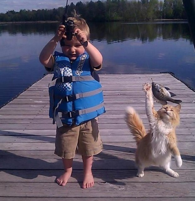 cat reaches for fish