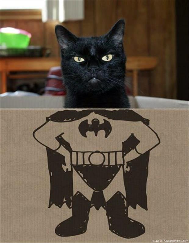 People Wearing Cats To Look Like Batman