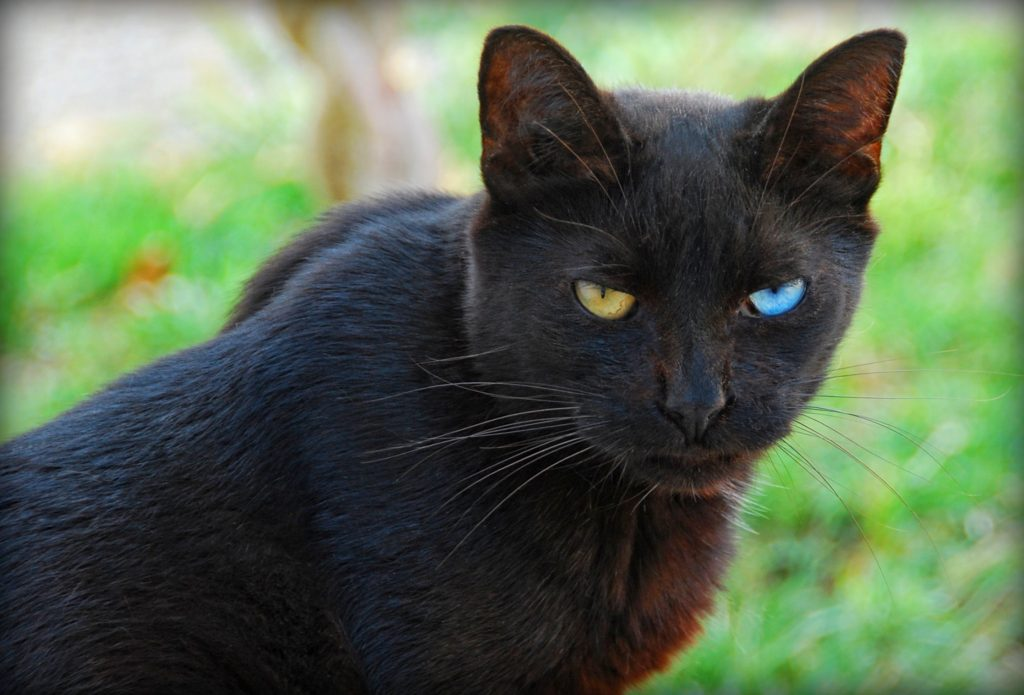 Black Cat Have A Nice Day