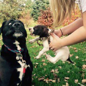 Nature Select Dog Food Orange County