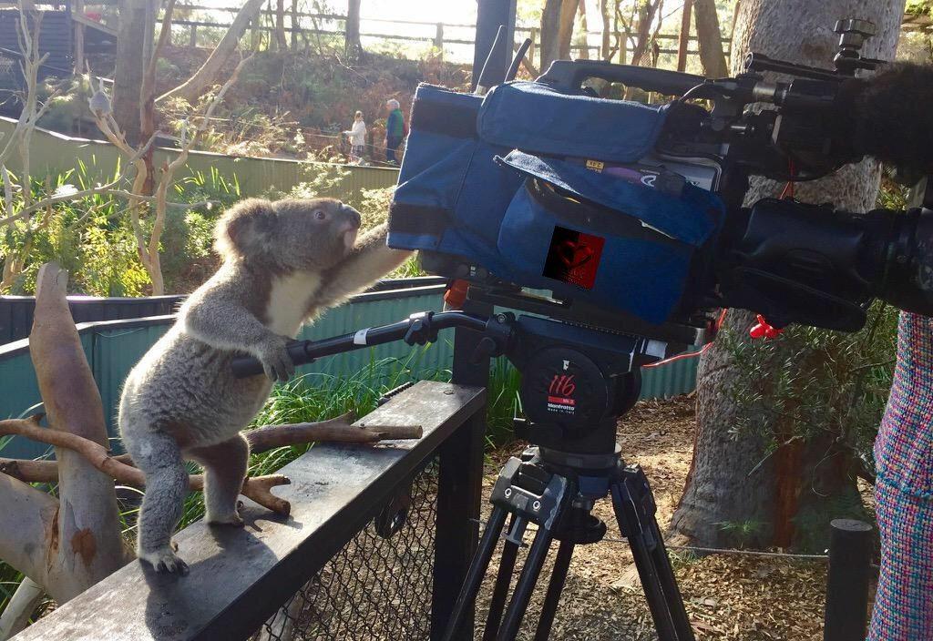 koala-camera