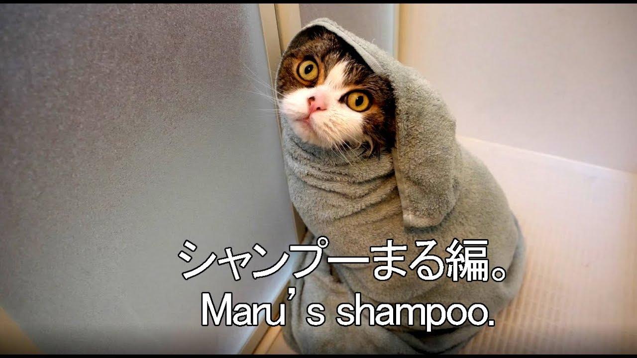 shampoing pour chaton