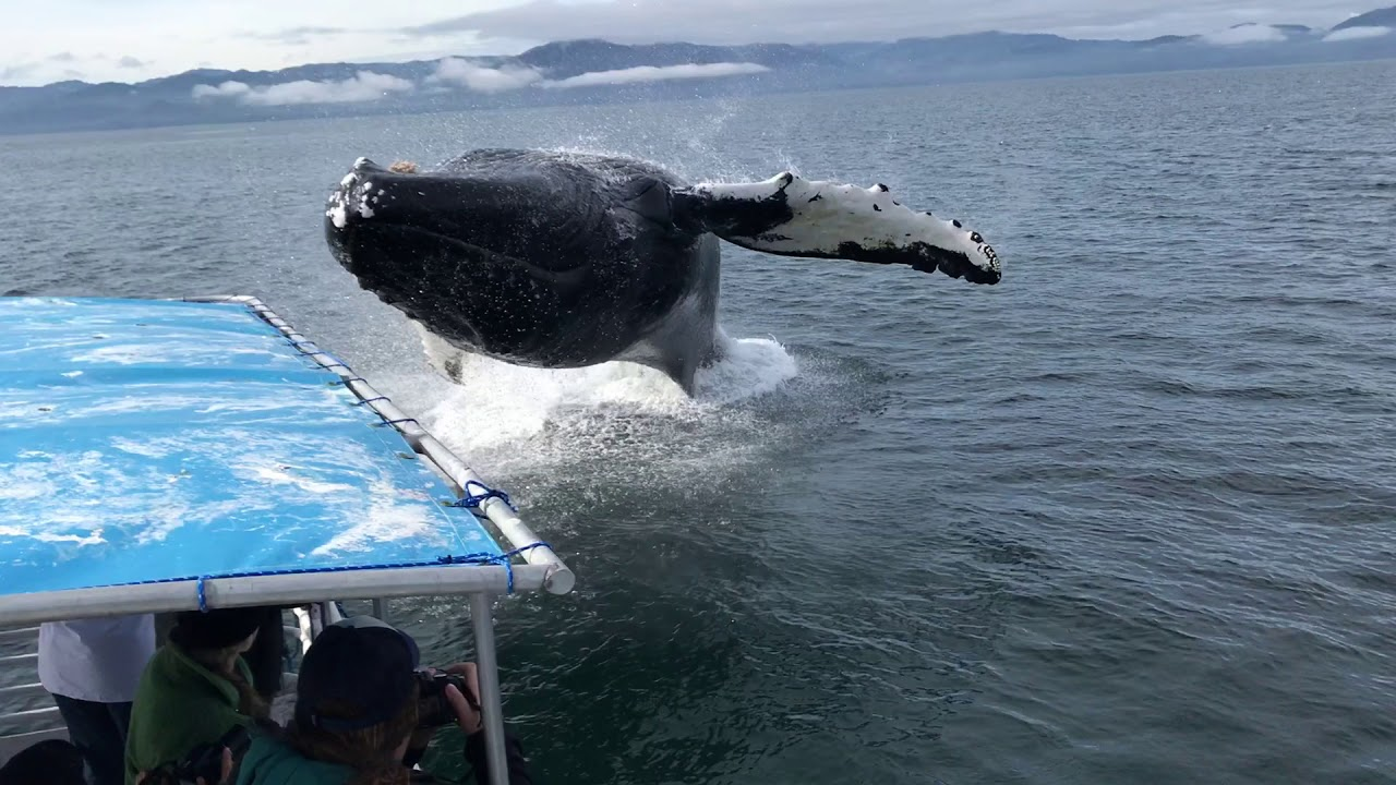 Whales Boat Tour