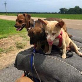 Alexa Dog Rescue Northumberland