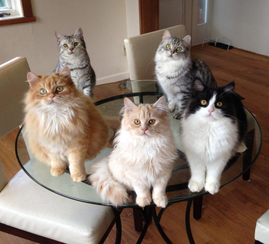 Cats For Sale Broadalbin Ny